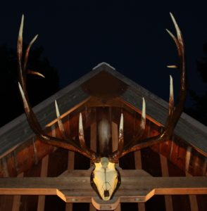 big-bull-night